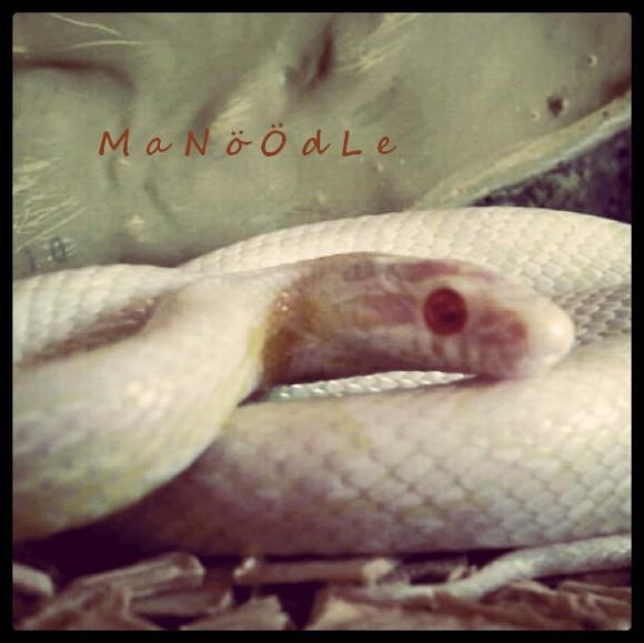 http://leeloo-snakes.cowblog.fr/images/Serpents/1a37819fc8e24b69b189b7731d1f16b77.jpg